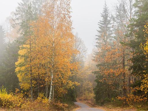 Dimma i Åby