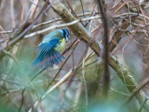 Närfåglar