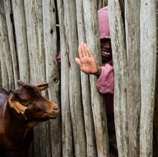 Masai boy with goat