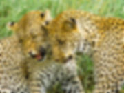 48-2011-12-31_Serengeti_274.jpg