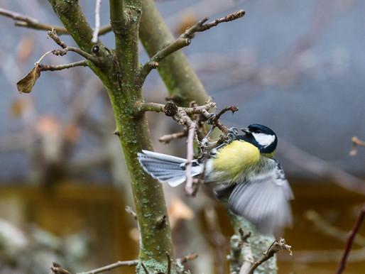 Småfåglarna...