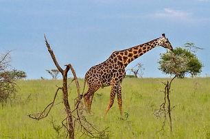 44-2011-12-30_Serengeti_625_LR.jpg