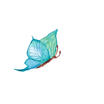 butterfly-lightblue.png