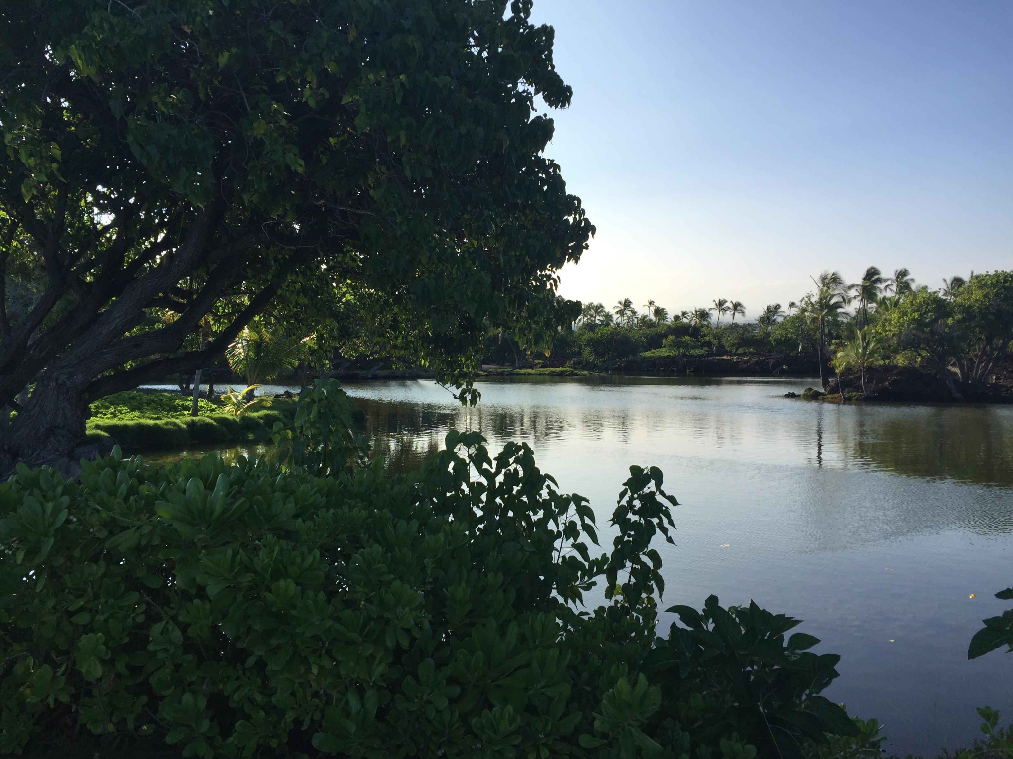 Mauna Lani Fish Ponds
