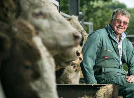 Simmental: la base de la ganadería más productiva de Inglaterra
