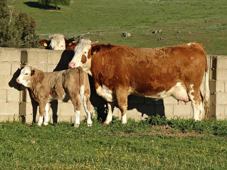 La importancia de la verificación parental para asociaciones y ganaderos