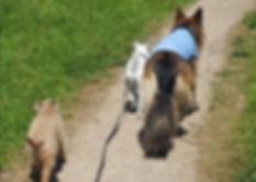 Happy Dogs - Dog Walker in Reading