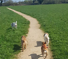 Happy Dogs - Dog Walker in Reading