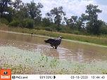 Reservas de agua para pobladores rurales y fauna silvestre en el Chaco Seco