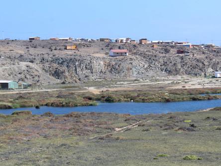 Con éxito se realizó Taller de Conservación de Humedales Costeros y Aves Playeras de Atacama