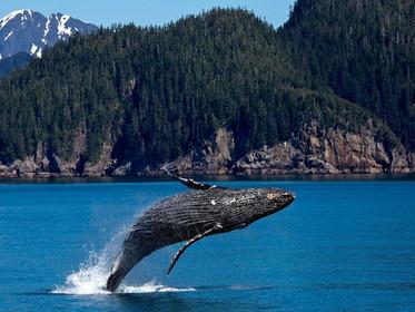 7 fatos surpreendentes que vão fazer você se importar mais com os oceanos