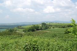 ブライザッハ郊外、ワインの名産地カイザーシュトゥール