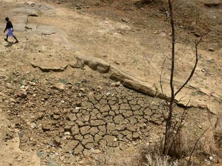 Mudanças climáticas reduzirão rendimento de cultivos essenciais
