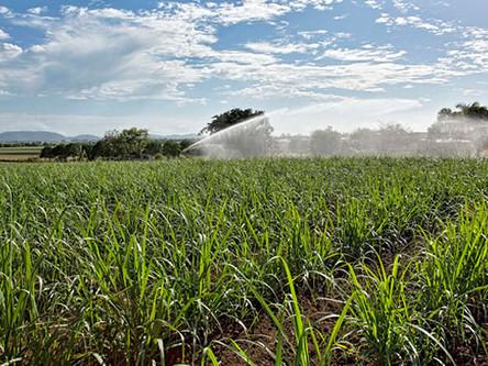El agua virtual y la sustentabilidad hídrica en la agricultura
