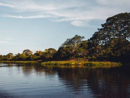 Pantanal – Flora e Fauna