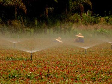 Igam e Semad publicam Resolução para dispensa de cadastro pelo uso da água