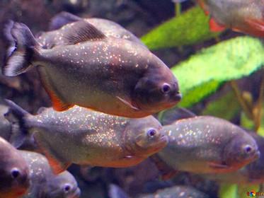 Pesquisa com organismos aquáticos avalia níveis seguros de agrotóxicos na água