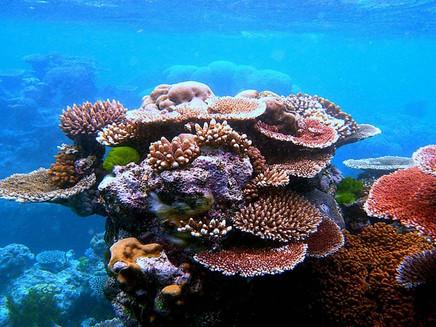 Aquecimento na água provoca morte recorde de corais na Austrália