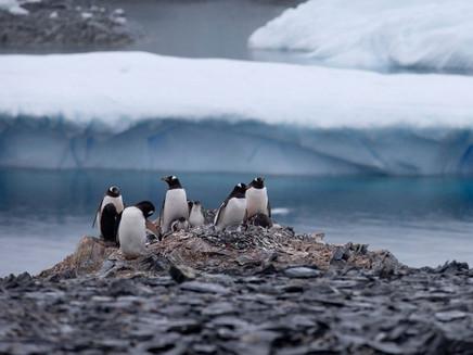 Cientistas farão primeira circunavegação da Antártica