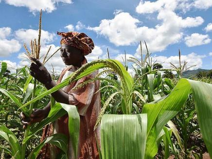 Mudanças climáticas provocarão queda nas colheitas mundiais na próxima década