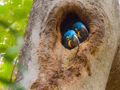 Pantanal – Localização e Caracterização