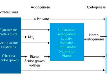 Hidrólise como pré-tratamento para otimizar o processo de digestão do lodo