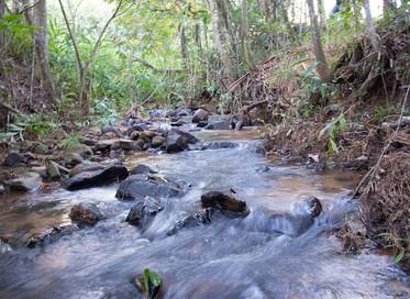 DAAE Rio Claro e Consórcio PCJ firmam parceria para viabilizar Recuperação Florestal das Áreas de AP