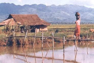 O gênero na gestão da água