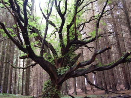 Startup sustentável oferece selos verdes a sites que ajudam a plantar árvores