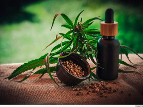 TJMG concede salvo-conduto para plantio de Cannabis