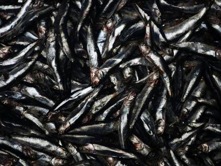 Peru prepara indústria pesqueira para enfrentar mudança climática