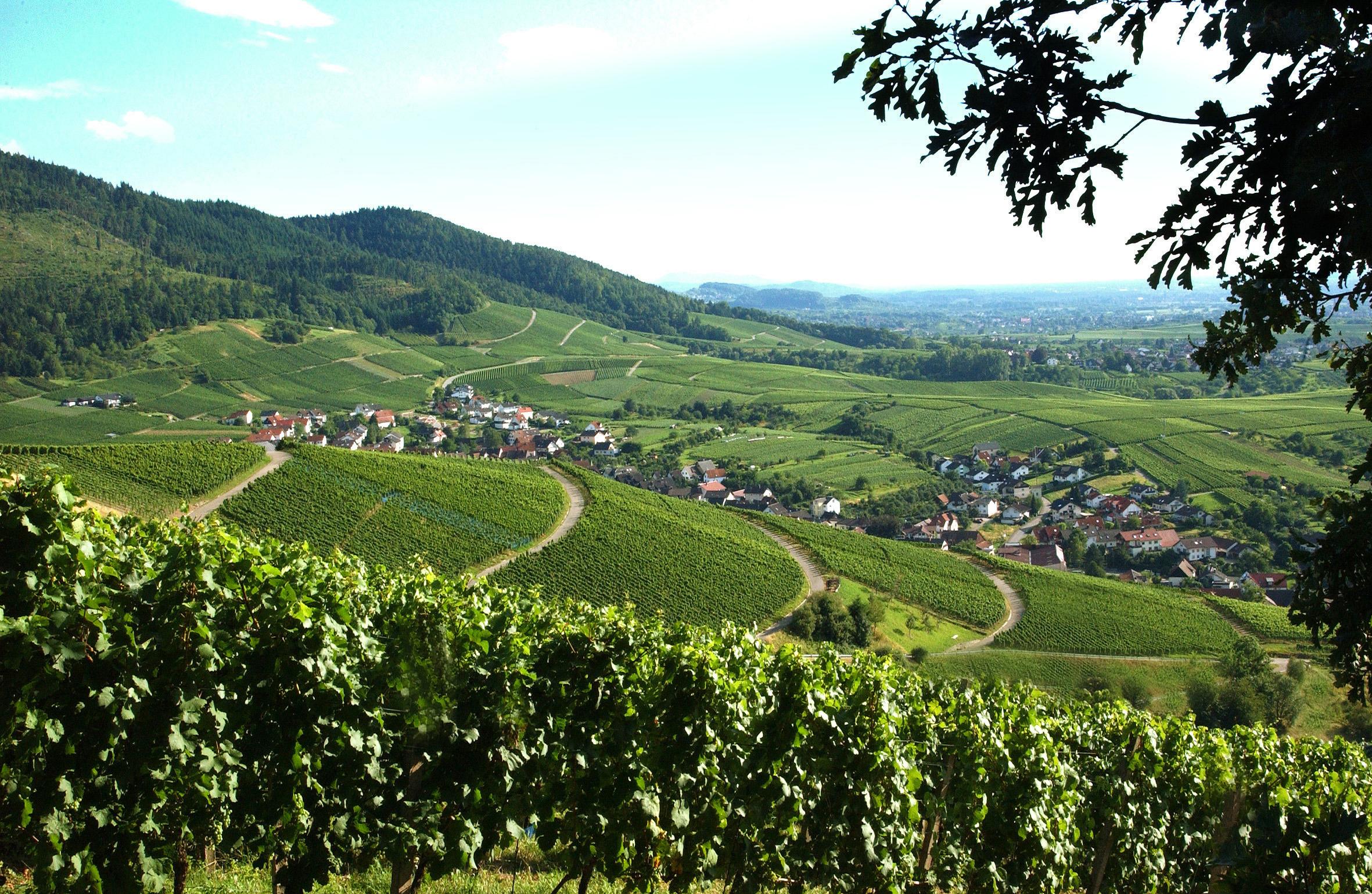 Baden-Baden Rebland