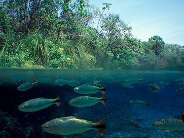 ANA seleciona consultores com conhecimento em Hidrologia e qualidade de água