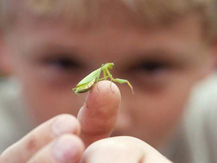 Invisíveis no debate climático, insetos vão sofrer com alta do termômetro