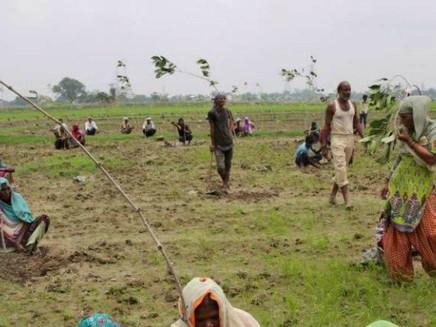Índia planta 50 milhões de árvores em 24h e bate recorde mundial