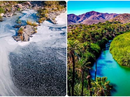 Restauración de ríos, un paso hacia la sustentabilidad hídrica
