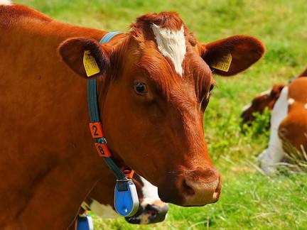 O uso de nanotecnologia e metagenômica traz perspectivas para a alimentação bovina