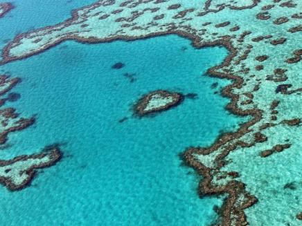Grande Barreira de Corais resistiu a cinco eventos de quase extinção, diz estudo
