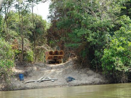 "Desmatamento está ""encolhendo"" os peixes da Amazônia"