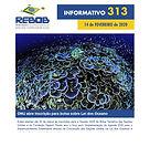 Informativo 313