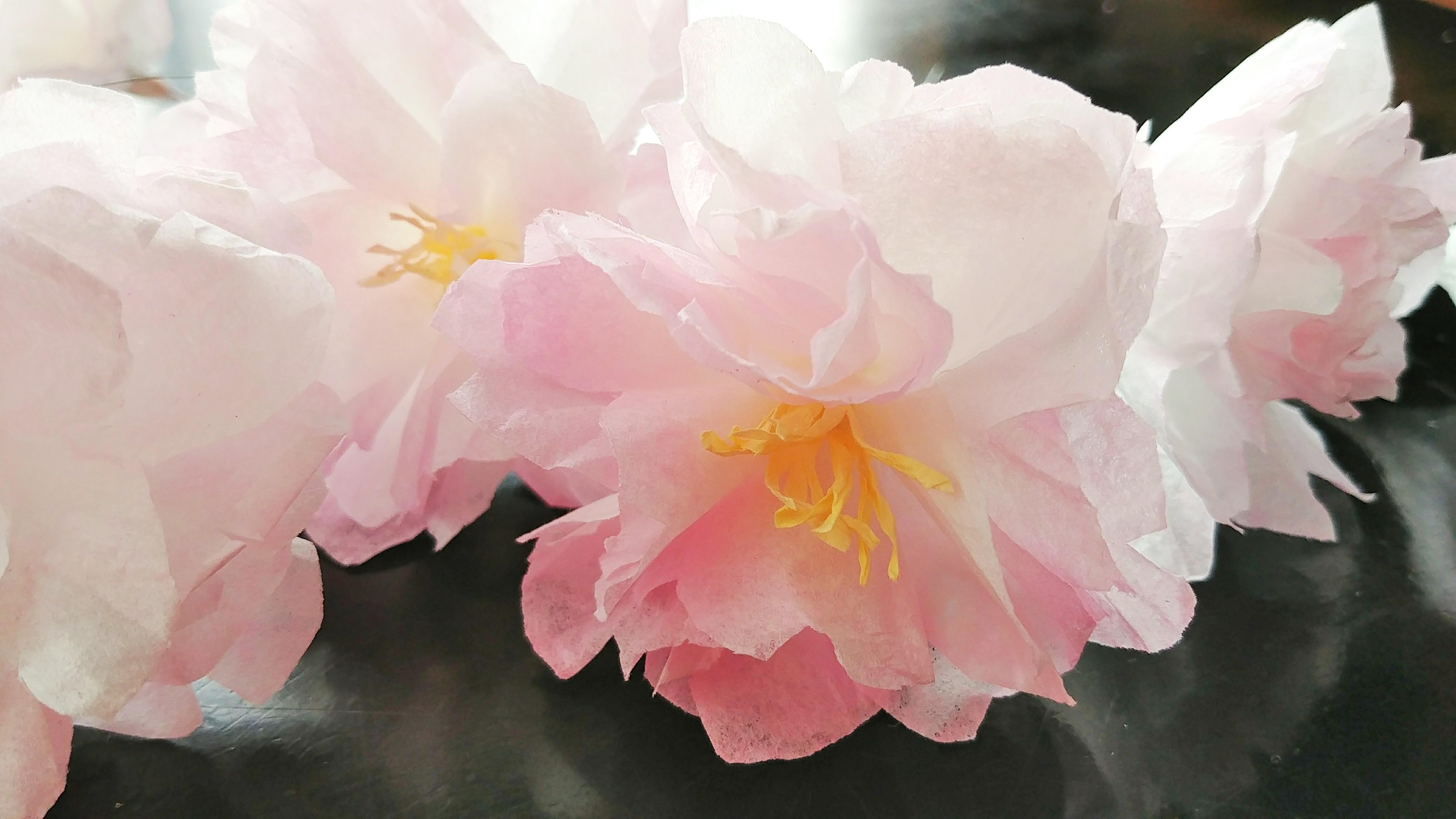 Kanzan Blossom