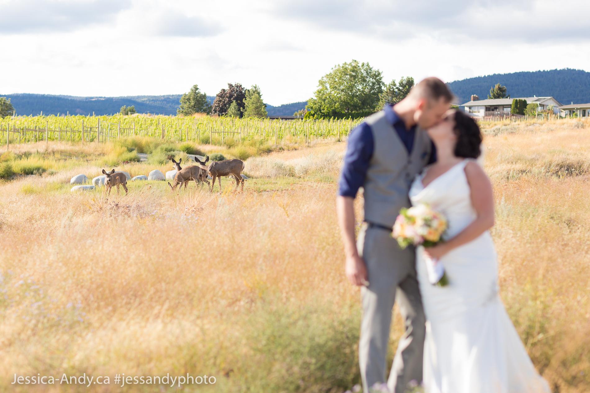 Okanagan Wedding Venue - Deer