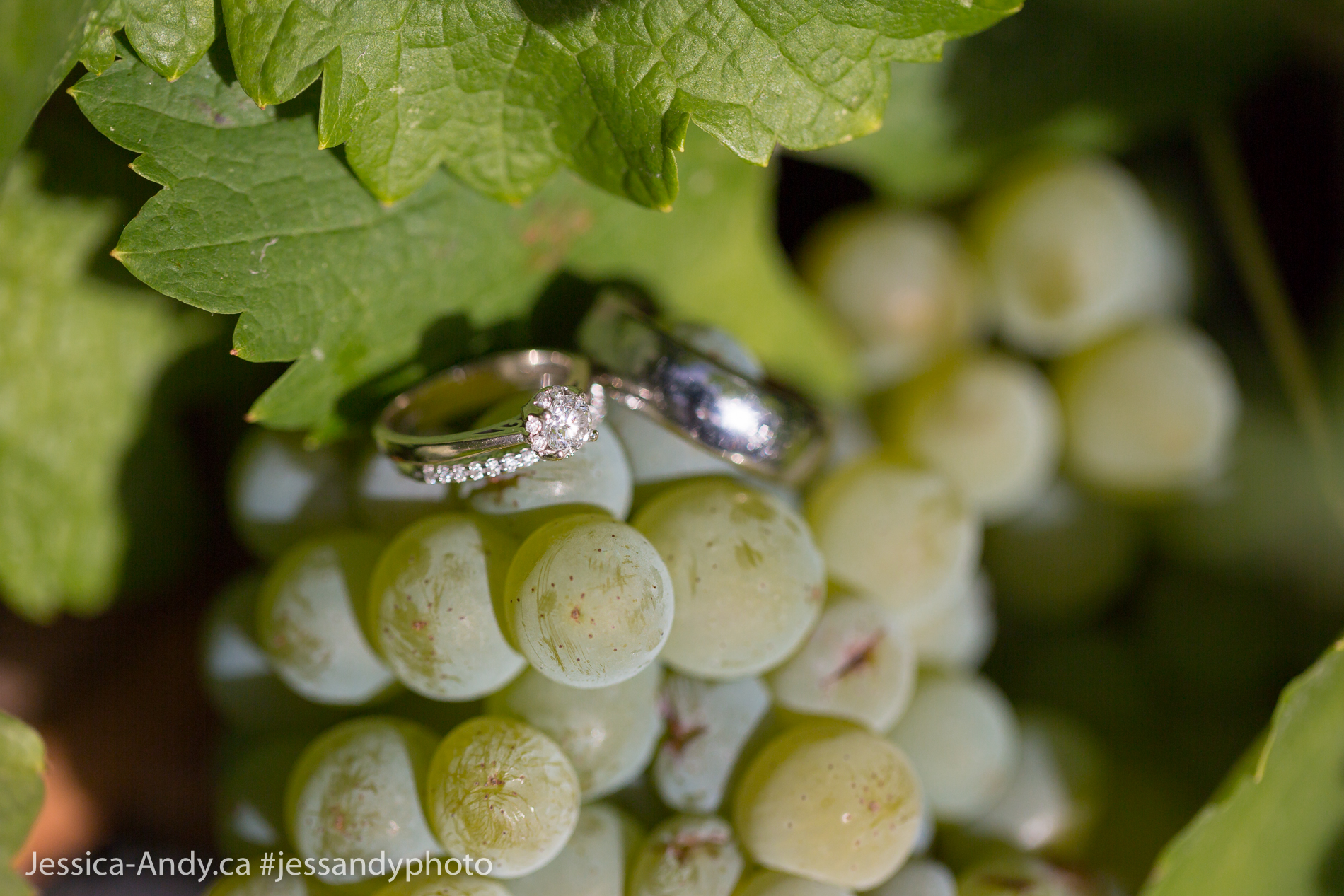 Okanagan Vineyard - Wedding Rings
