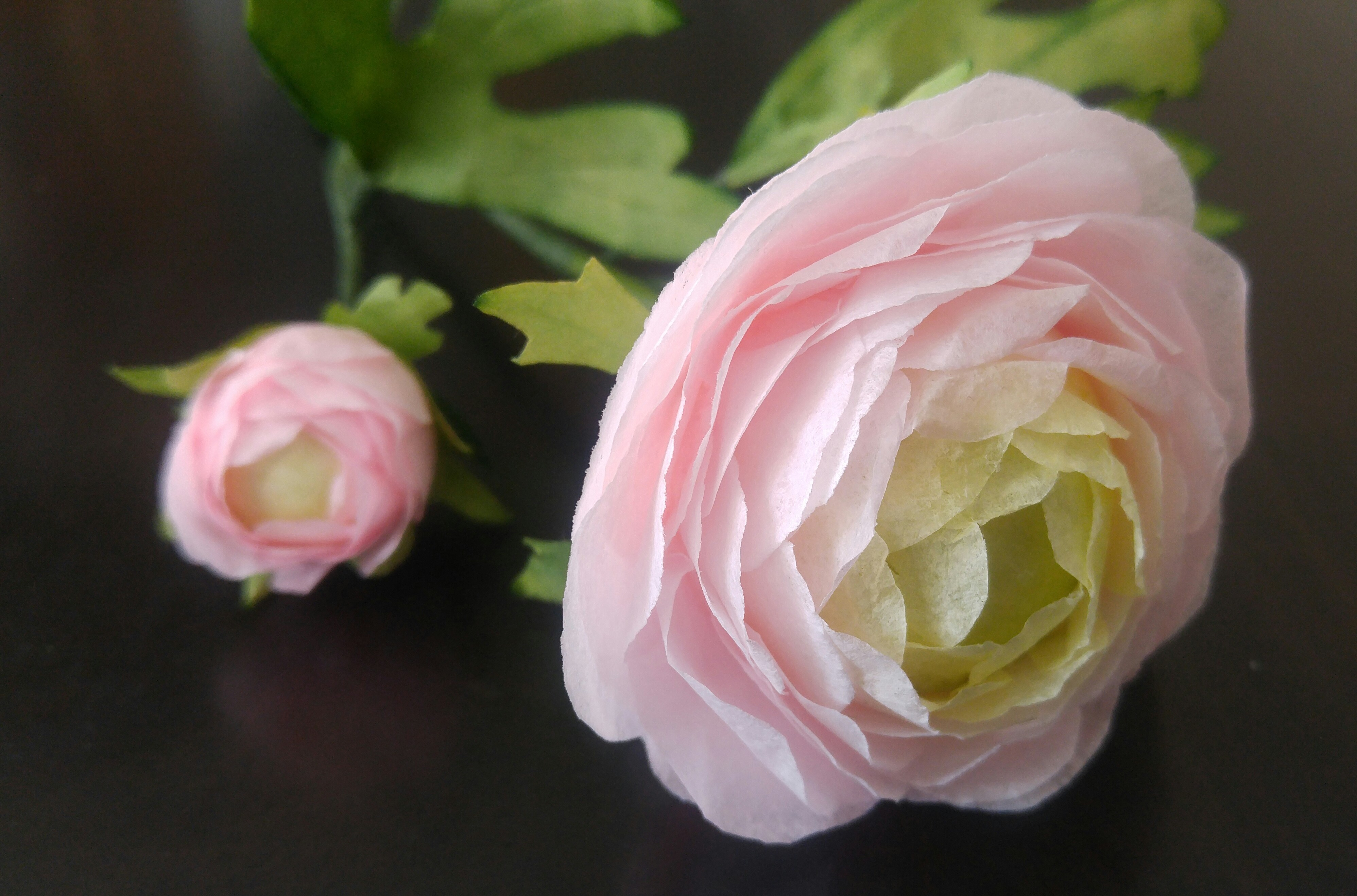 Pink Ranunculus & Greens
