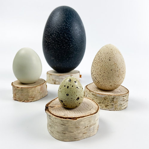 4 Egg Collection