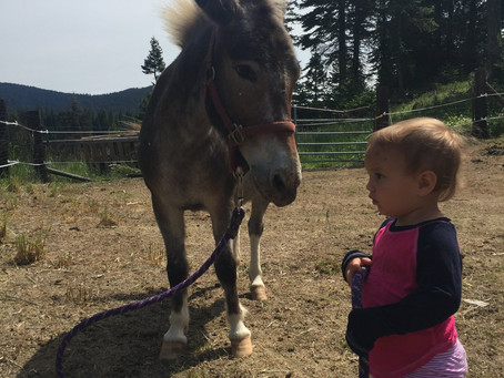 Rescuing our first mule