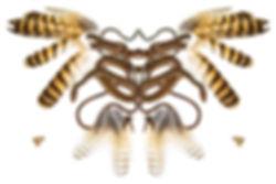 snakeowl4mg.jpg