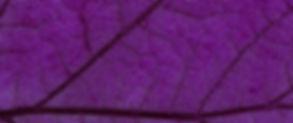 red%252520leaf%252520in%252520close%2525