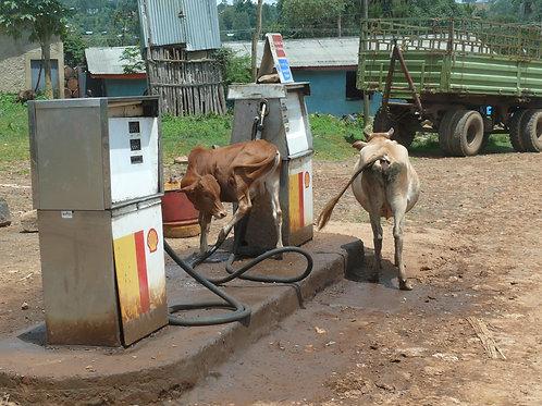Photo à encadrer - Biocarburant (29,7 x 21cm)