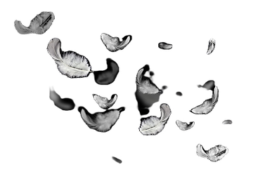 white-feathers-floating-air-isolated-bla
